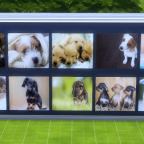 Hundebilder Sims 4