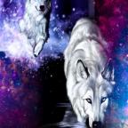 Große Wolf Wand Bilder